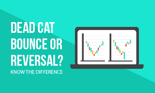 Dead Cat Bounce or Reversal? Know the difference